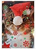 store Katzen Adventskalender Katzenadventskalender 24 Leckerlis Weihnachtskalender für Katzen
