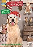 Pawsley Adventskalender Hund