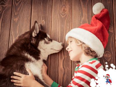 hunde-adventskalender-box